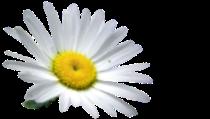 flower_gor
